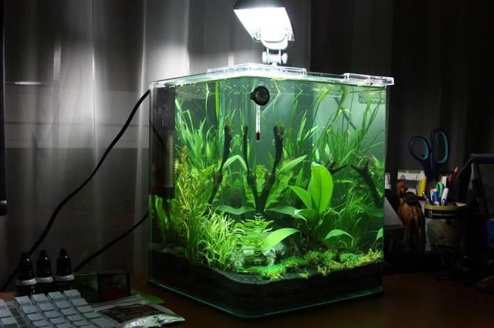 уход за растениями в аквариуме видео