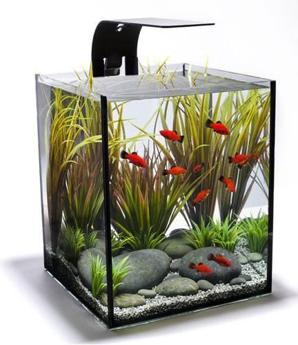 небольшой аквариум
