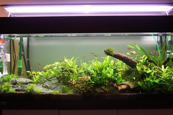 почему затухает вода в аквариуме