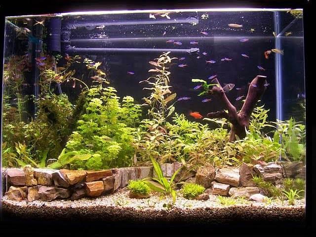 неоны аквариумные рыбки