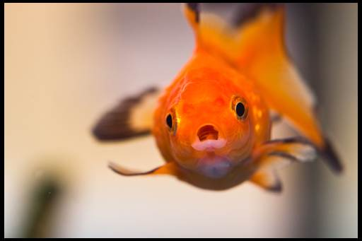 налет как вата на рыбке