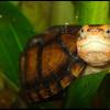 черепахаd8d626