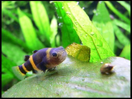 малунькие аквариумные рыбки
