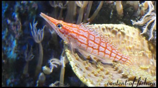 Видео необычные аквариумные рыбки