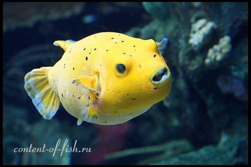 аквариумный хищник