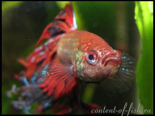 Самые редкие аквариумные рыбки  виды и фото
