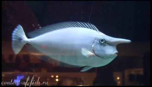 Вид некоторых рыбок вызывает улыбку