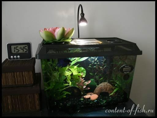 Как сделать укрытье для рыбок