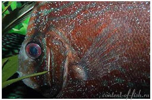 болезнь аквариумных рыбок