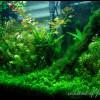 заросли аквариумные