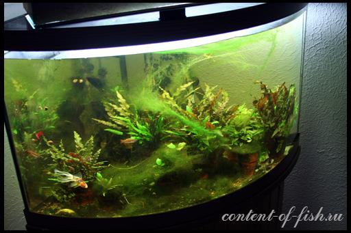 нитчатые водоросли