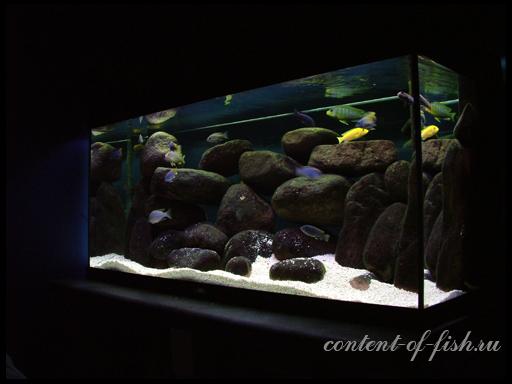 аквариум с цихлидами
