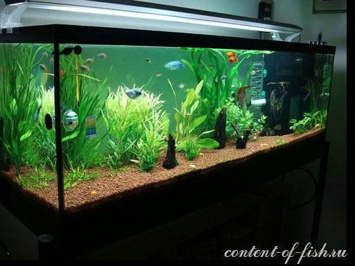 аквариум5589.jpg