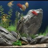 болезни рыб