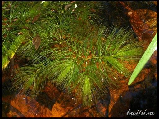 водоросли  и растения