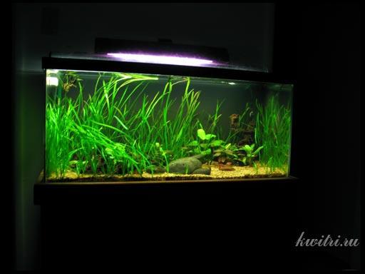 неприхотливые растения для аквариума