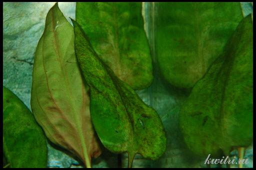 коричневый налет на растениях