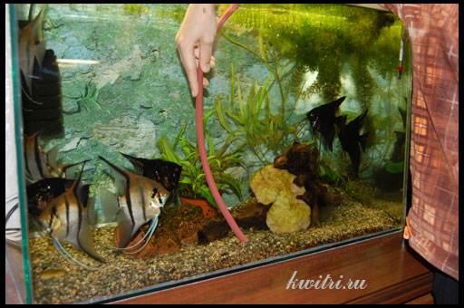 подмена воды в аквариумах