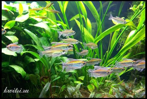 содержание рыбок