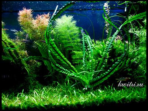 аквариумные растения и водоросли
