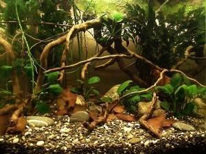 Аквариум Биотоп