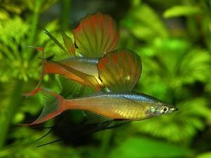 Воздействие факторов среды на аквариумные растения