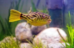 Жесткость и кислотность воды в аквариуме
