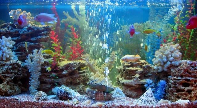 Качество воды в аквариуме