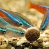 Выбор корма для аквариумных рыбок