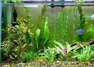 Нагревательное оборудование для аквариума