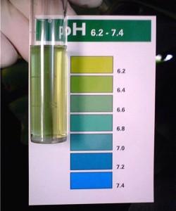 Показатели воды pH в аквариуме