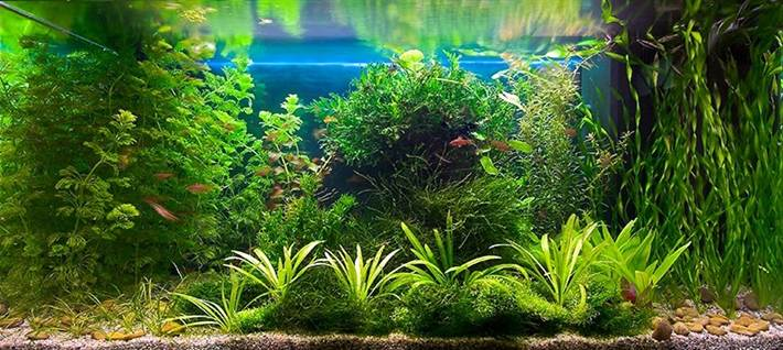 Размещение растений в аквариуме