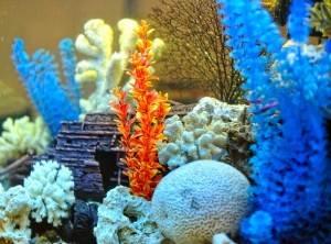 Установить в аквариум декоративные элементы