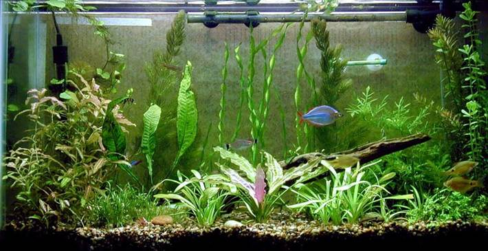Протечка аквариума