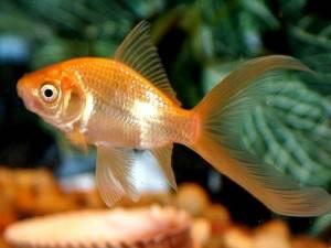 Травмы у рыб