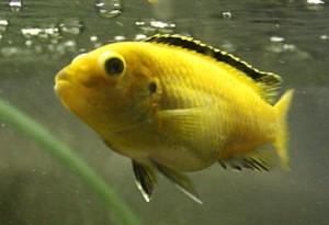 Недостаток кислорода у рыб