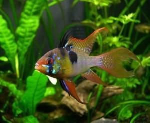 Синдром нового аквариума