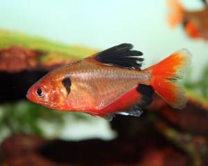 Отравление рыб медикаментами