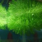 Подкормка аквариумной флоры