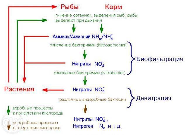 Азот и азотистые соединения в аквариуме