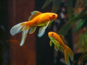 Ацидоз и алкалоз у рыб