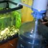 подмена воды в аквариуме