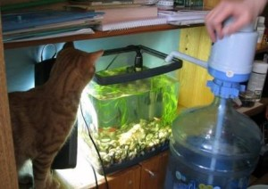 Чем продиктована подмена воды в аквариуме и как это делается
