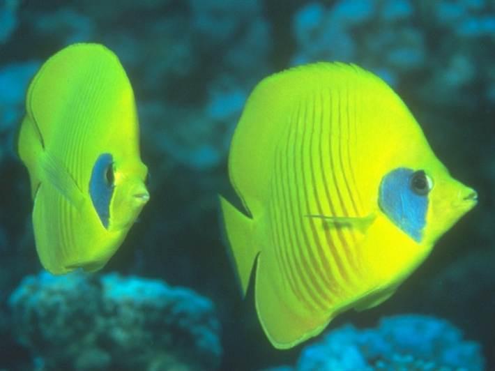 отравление рыб нитратами