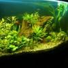 Отравление рыбок химией