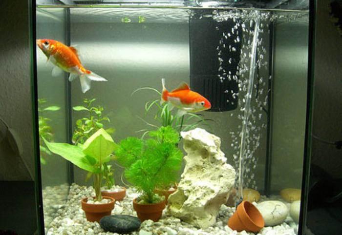Донный фильтр в аквариуПодарки к новому году