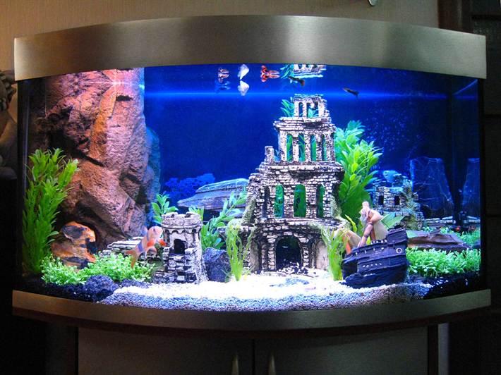 Дизайн оформления аквариума