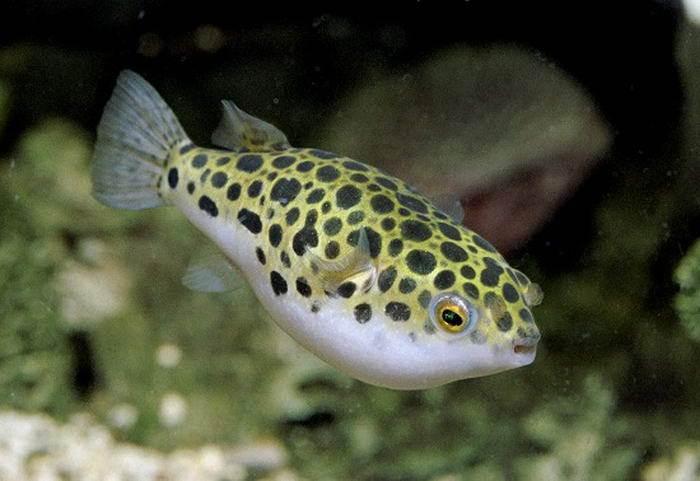 фото аквариумных рыб виды