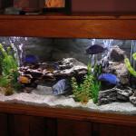 ukhod-za-akvariumom
