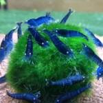 kak_izbavitsya_ot_vodoroslej_v_akvariume_bez_preparatov